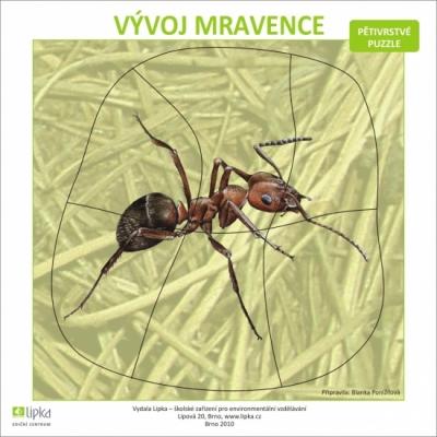 Vývoj mravence - puzzle  (B. Ponížilová)