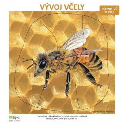 Vývoj včely - puzzle (B. Ponížilová)